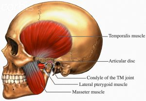 bruxism-mastication-muscles